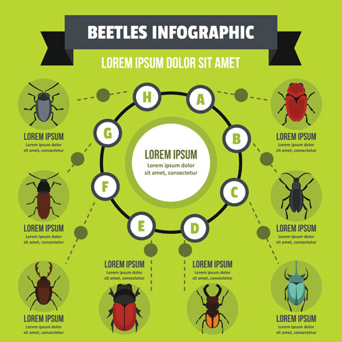 Insect information chart Vector EPS