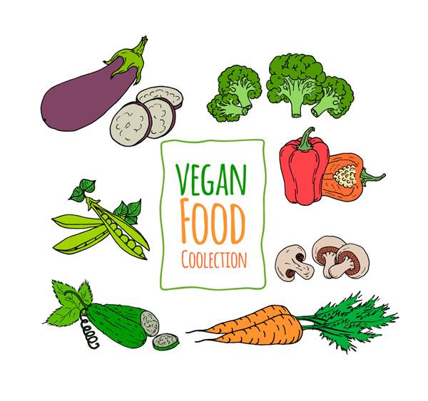 Painted vegetarian vegetable Vector AI