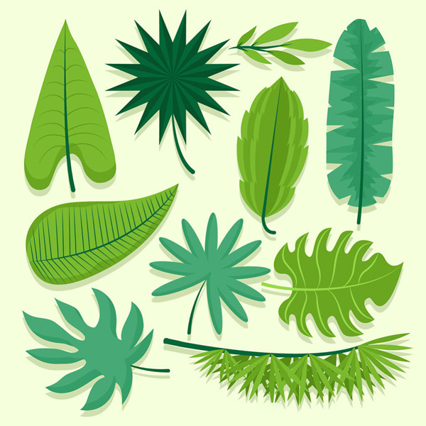 Various shaped leaves Vector EPS